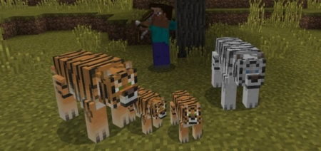 Аддон на тигров 1.0.6, 1.0.4, 1.0.0